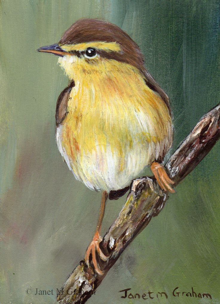 Willow Warbler ACEO / Bird / Wildlife / Original Acrylic ACEO painting by Australian Artist Janet M Graham by ArtDownUnder on Etsy