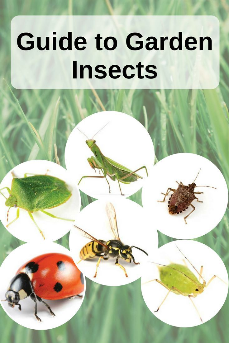 Garden Insects: Friend Or Foe? - Gardening