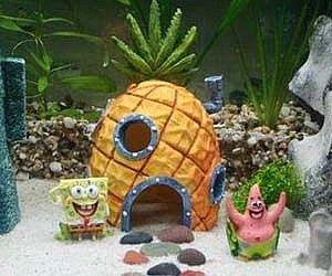 Spongebob Aquarium Ornaments . Who lives in a pineapple-shaped Spongebob aquarium ornament? Your goldfish, that's who. Give your aquarium ...