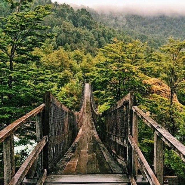 """""""Puente colgante sobre el Río Témpanos, ubicado en el Parque Nacional Queulat en la Región de Aysén. Gran parte del parque está cubierto por una selva…"""""""