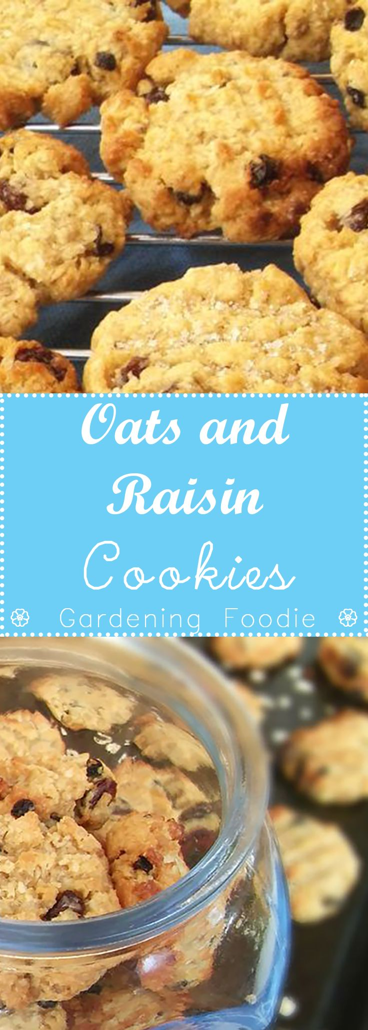 Oats and Raisin cookies ⋆ Gardening Foodie