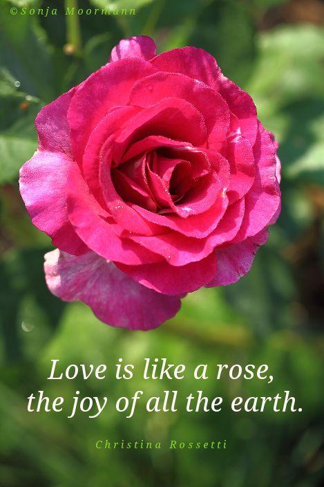 Foto MeditationBeautiful FlowersRosesBeautiful Quotes