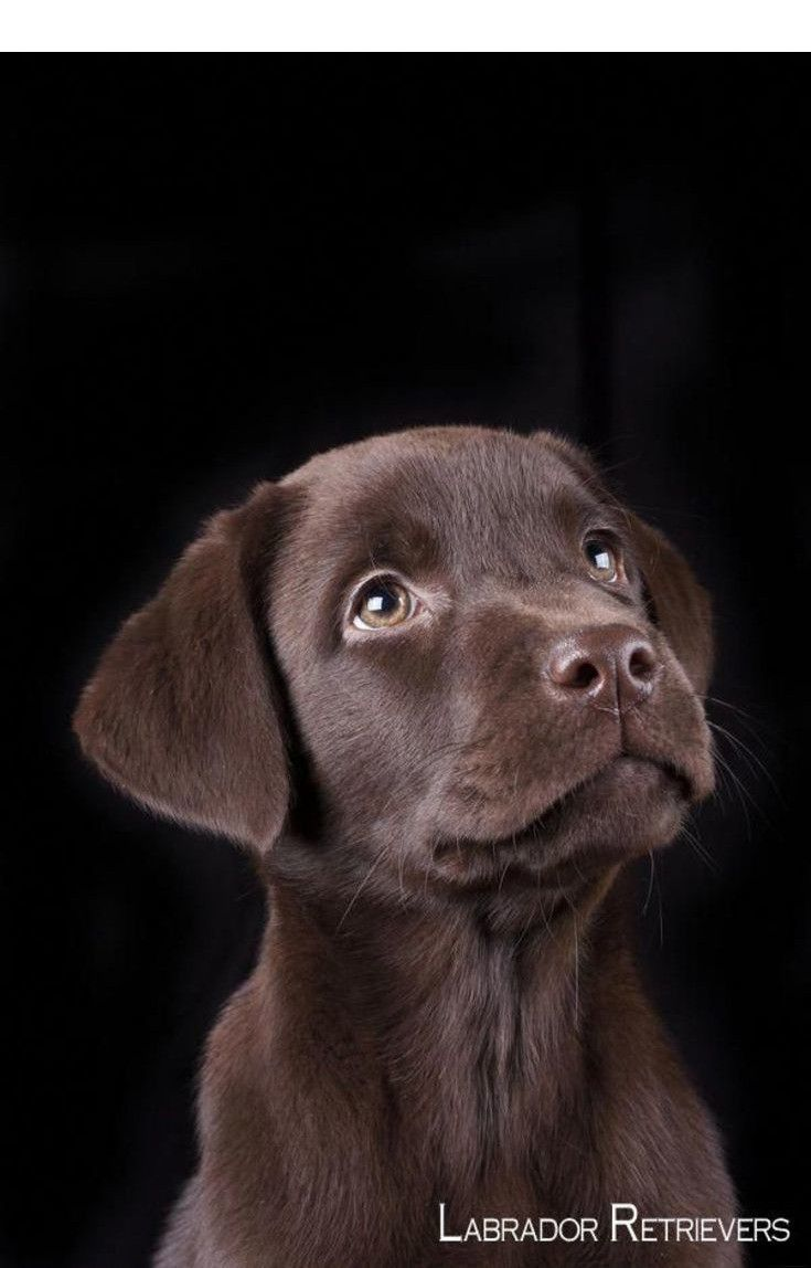 Find Out About Cocker Spaniel Check The Webpage To Find Out More Our Web Images Are A Must See Hunde Labrador Retriever