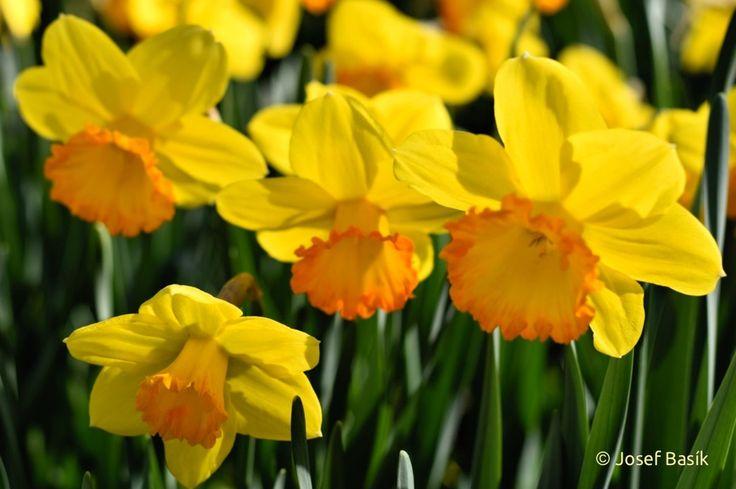 Narcis Mary Bohannon