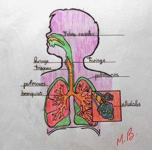 Nuestros dibujos del aparato circulatorio #jiribillas #blogjiribillas #recursos #recursoseducativos #recursosparaelaula #juegos #actividadesprimaria #naturales #cienciasnaturales #conocimientodelmedio  #aparatocirculatorio #cuerpohumano #elcuerpohumano #esquemas