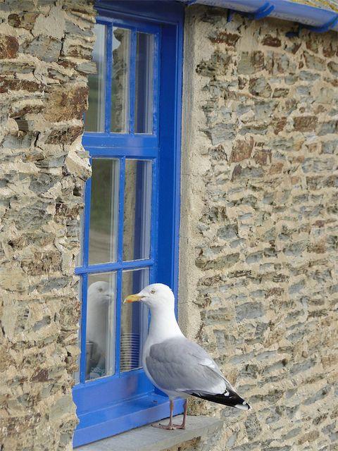 Cornwall via Flikr re pinned by www.rosevine.co.uk
