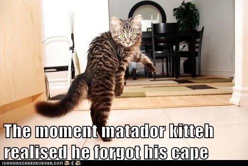 Perfect picture!! Kitten: Laughing, Dance Kitty Lol, God, Dance Kittylol, Funny Cat, Cat Humor, Bubbles, Funny Animal, Kittens