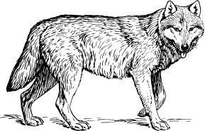wolf 1 by @papapishu, This image was donated by Pearson Scott Foresman, an educational publisher, to Wikimedia Commons, and is thereby in the Public Domain. --- See http://commons.wikimedia.org/wiki/Category:Pearson_Scott_Foresman_publisher, on @openclipart