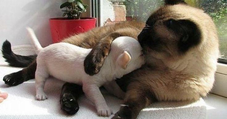 20 Υπέροχες Φωτογραφίες που Αποδεικνύουν ότι μία Γάτα και ένας Σκύλος μπορούν να Γίνουν οι Καλύτεροι Φίλοι! Crazynews.gr