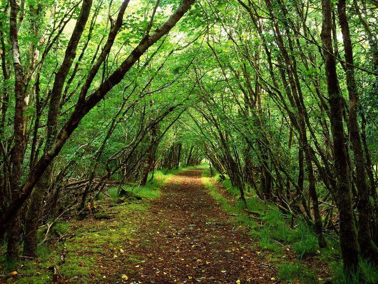 Forest-Green-Wallpaper.jpg (1600×1200)