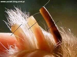 How to trim bunny nails properly...this still scares me every time