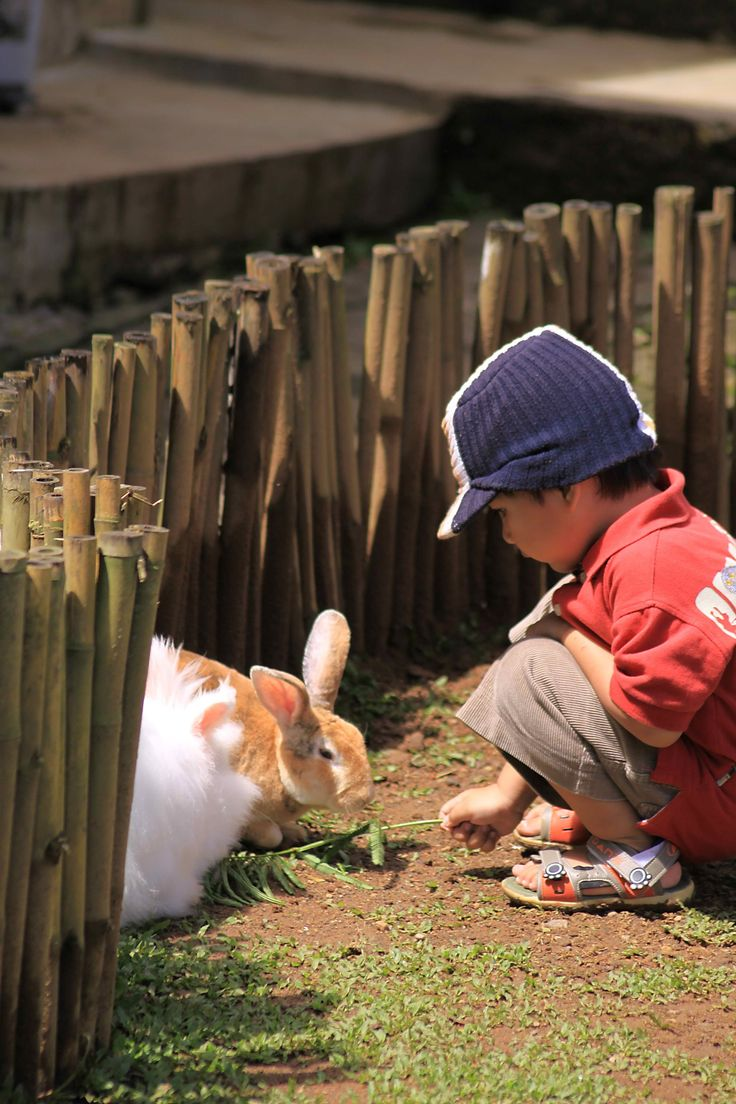 rabbit garden kids and family are highly recommended to visit the rabbit garden, see how attractive they are! at the same time the kids will also gain new information on vegetables, spices and fruits, which grow in rabbit garden area. open daily from 08.00 am to 04.00 pm. more info http://www.novushotels.com/