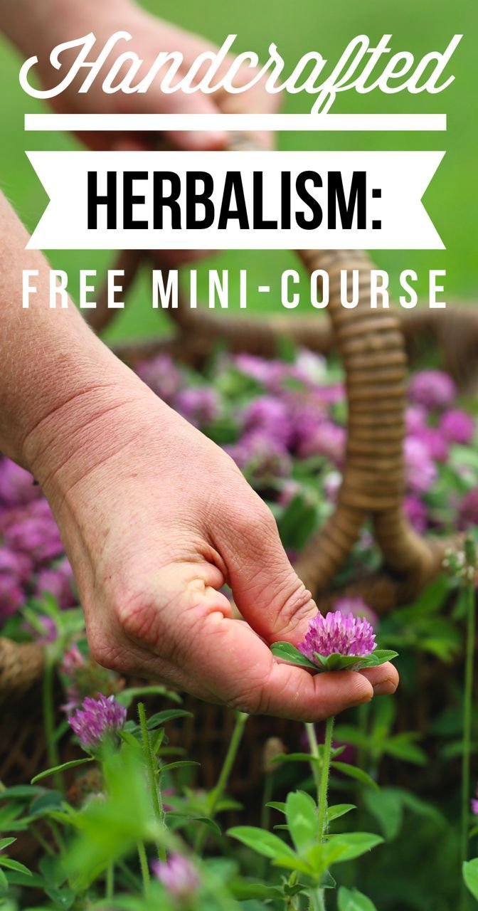 Handcrafted Herbalism: A free online mini-course with Chestnut School of Herbal Medicine More