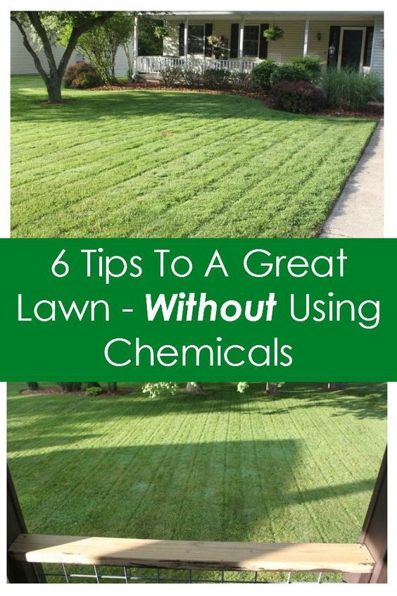 6 tips to a great lawn without using chemicals lawn for Garden maintenance tips
