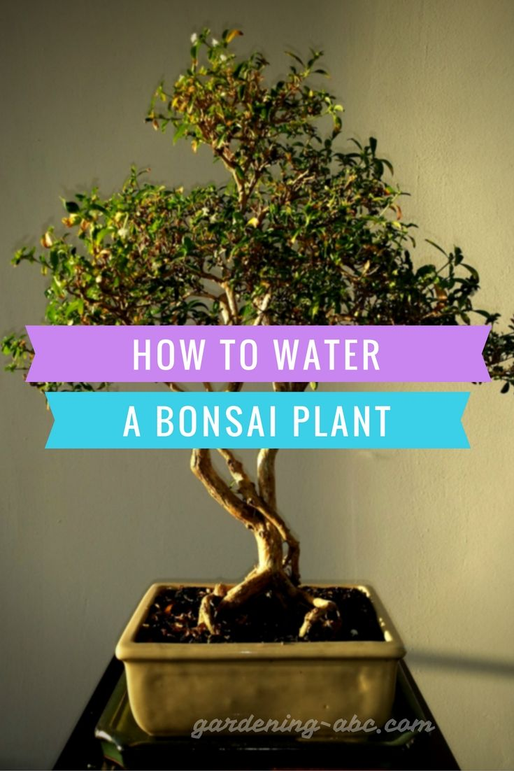 17 Best Images About Grow In Containers On Pinterest Growing Plants Planters And Fruits And