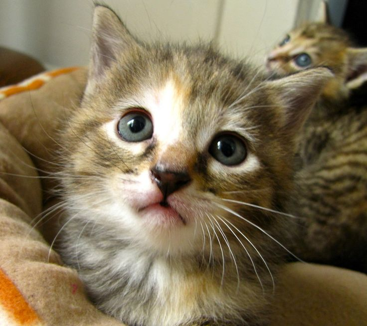 5 Common Mistakes New Cat Owners Make ... Adopting a first cat is a bigger step then most people think. Many people aren't aware of the veterinary costs that are involved, the proper food they should be feeding their cat, or even how much their cat should be fed. Keep reading to learn some common mistakes that first time cat owners make. ... #petcaretips #pets #animals ... PetsLady.com
