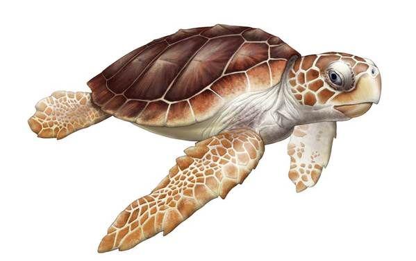 scientific illustrations of reptiles by Juan Muñoz, via Behance