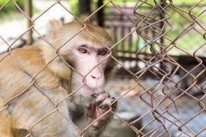 A roadside zoo has allegedly been mistreating its animals for years. The USDA has cited the zoo for not providing adequate veterinary care, shelter or enrichment. Despite all these warnings, the zoo has apparently done nothing to clean up its act. Sign this petition to demand the zoo retire all its animals to accredited sanctuaries.