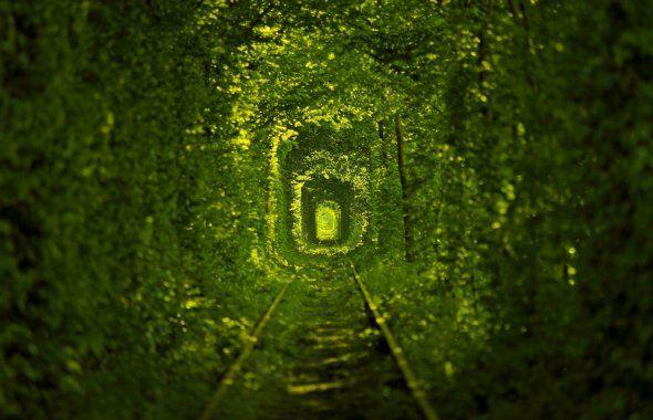 Тоннель любви украина тунель кохання ровенская область поселок клевань путь природа зеленый фон жд путь макро фото тема красивые фото картинки и обои на рабочий стол в HD качестве