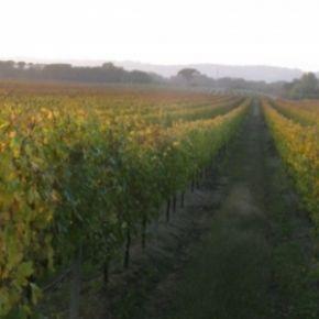 Un calice di Lazio - Vitigni storici danno vita a grandi vini. Mai valorizzati a sufficienza sulle tavole romane