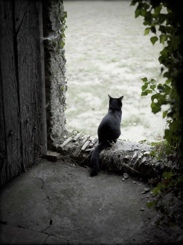Rachael Hale Mckenna Photography   The French Cat   All