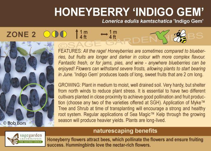 Indigo Gem Honeyberry/Hascap zone 2