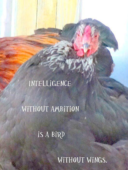 Intelligence Without