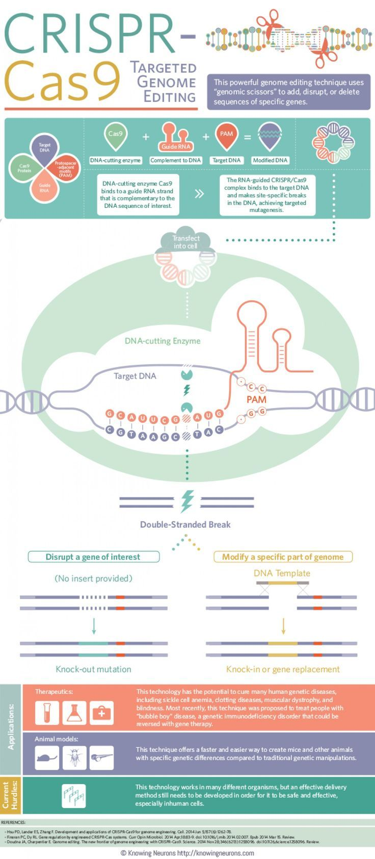 Application Of Crispr In Medicine