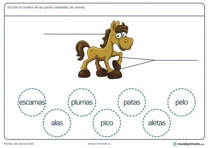 Ficha de las partes del caballo para primaria