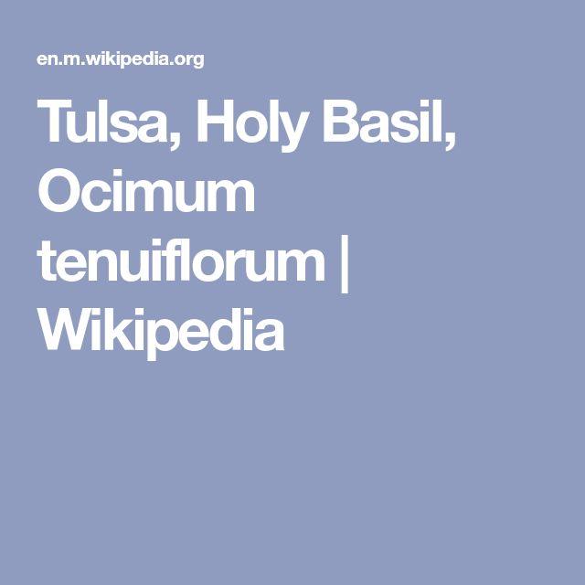 Tulsa, Holy Basil, Ocimum tenuiflorum | Wikipedia