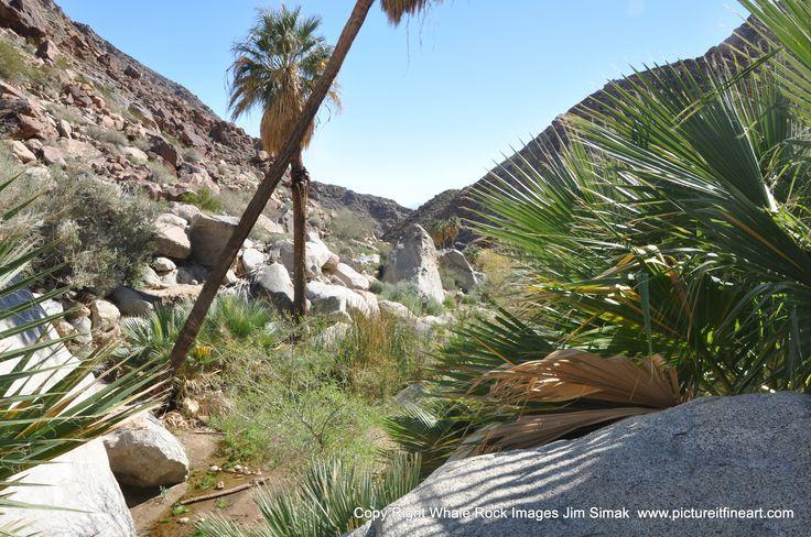 Anaza-Borrego St. Pk. CA Palm Canyon Trail