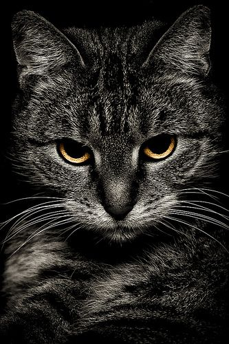 Cat (very dark tabby cat...reminds me so much of our Samantha...recently departed for The Rainbow Bridge)