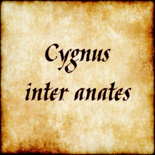 Cygnus inter anates - Swan among ducks( ;) ) Follow us at facebook.com/LatinQuotesPhrases