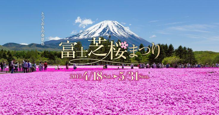 富士芝桜まつり@山梨