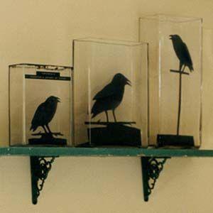 raven silhouettes diy halloween decorationsideas - Raven Halloween Decorations