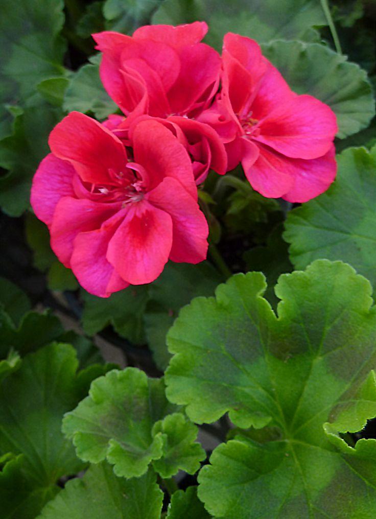 Shade Garden Plants Zone 5