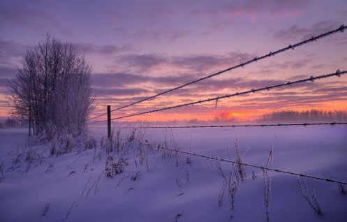 Barbed Wire Fence | Winter | Barbed wire, Barbed wire ...