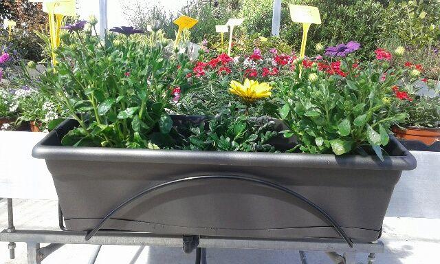 Jardinera color antracita (gris oscuro) con colgador de 60 cm