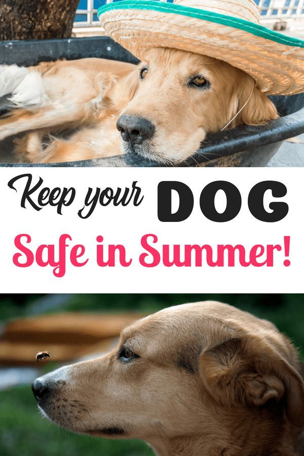 Keeping Your Dog Safe During The Summer Dogs Pet Insurance