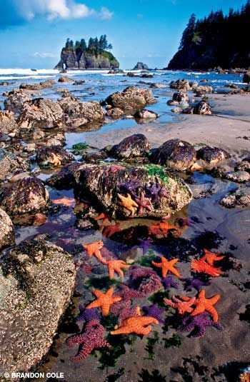 #Ocre sea stars Olympic Mountains, Washington #Travel Washington USA multicityworldtra... We cover the world over 220 countries, 26 languages and 120 currencies Hotel and Flight deals.guarantee the best price