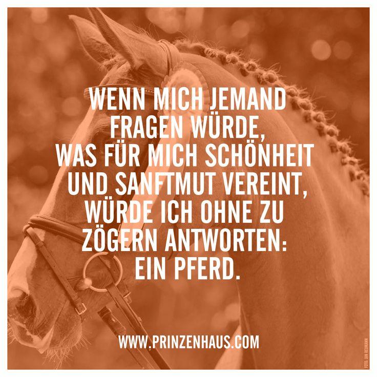 www.prinzenhaus.com WENN MICH JEMAND FRAGEN WÜRDE, WAS FÜR MICH SCHÖNHEIT UND SANFTMUT VEREINT, WÜRDE ICH OHNE ZU ZÖGERN ANTWORTEN: EIN PFERD.