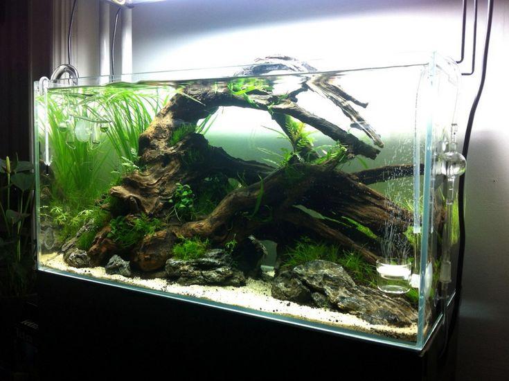 Best 25 55 gallon aquarium ideas on pinterest 55 gallon for 10 gallon fish tank dimensions