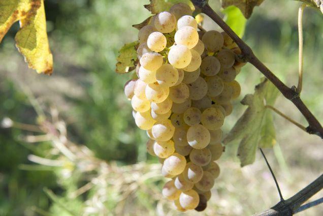 Nel mio percorso sulla conoscenza del vino, fatto di degustazioni, ho incontrato…
