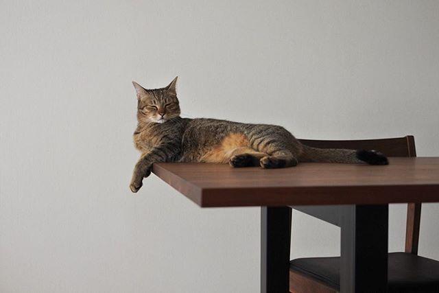 いつか落ちる、と思ってます。  #ちゃんた290日目② #猫 #ねこ #cat #cats  #chat #ilovecat #instacat #catlover #cute #catoftheday #愛猫 #고양이 #保護猫 #被災猫  #キジ猫 #tigre #キジトラ #love #이쁘다 #mignon #browntabby #catsofinstagram #catstagram