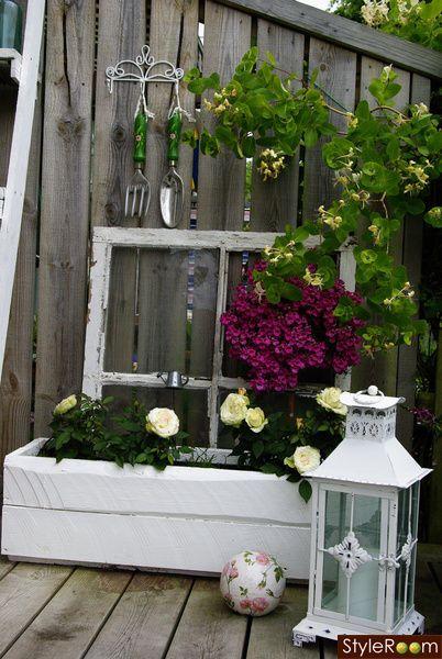 ,trädgård