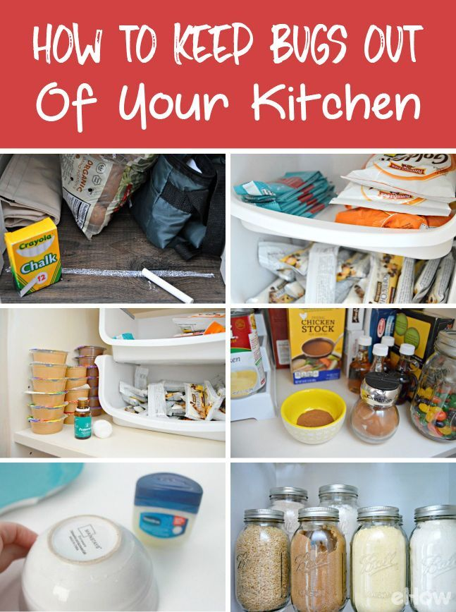There's nothing worse than bugs in the kitchen! They can cost you lots of money in products and food you have to replace. Here's how to keep them from invading your  space and food: http://www.ehow.com/how_12343245_keep-bugs-out-pantry-kitchen.html?utm_source=pinterest.com&utm_medium=referral&utm_content=freestyle&utm_campaign=fanpage