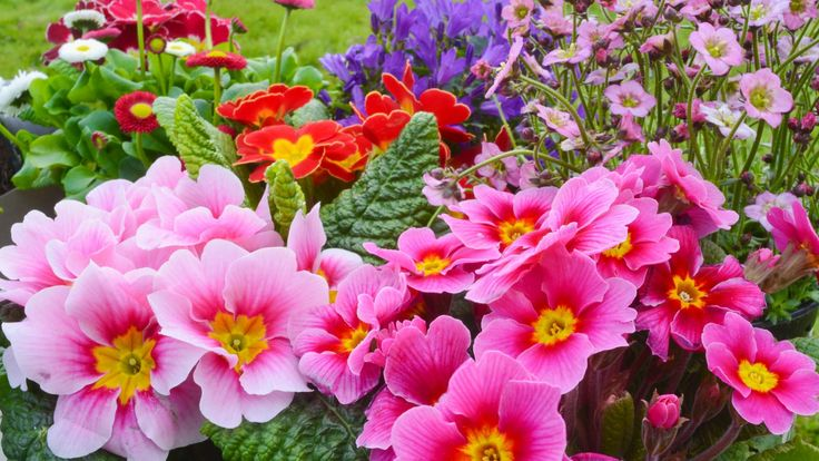 Awesome Colorful Summer Garden Flowers |If you plan to include some flowers in your summer garden then you should take a moment to learn about those flowers or flowering plants that are best suited to summer months and what those plants like by way of sunlight and shade. Not all flowers are... - http://www.cammnet.com/2016/07/10-awesome-colorful-summer-garden-flowers.html