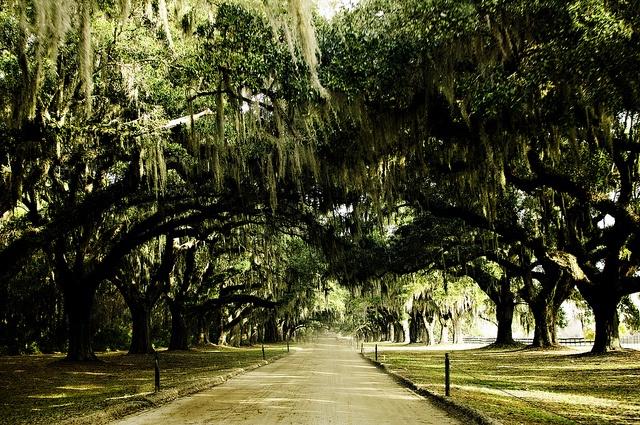 Live Oaks at Boone Plantation, SCDreams Driveways, Beautiful Places Somewhere, Post, Plantations Drive, Favorite Places, Travel Anywh, Boone Plantations, Boone Hall, Hall Plantations