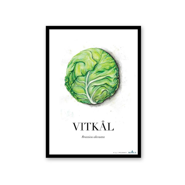 Cabbage poster from the Roots collection by SLOYDLAB.
