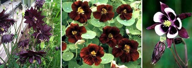 Brown Flowers That Satisfy A Craving For Chocolate